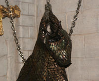Hanging Dragon Skin Trophy showing Head
