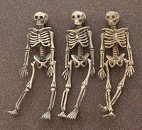 Plastic Skeletons